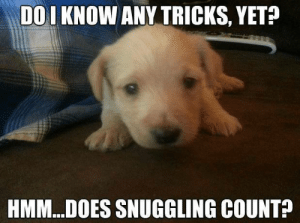 Memes, 🤖, and Yes: DOI KNOW ANY TRICKS, YET?  HMM..DOES SNUGGLING COUNT? It sure does don't you think Y  =  Yes  N  =  No