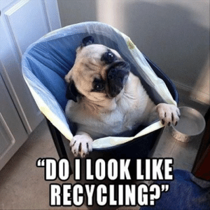 "Animals, Dogs, and Memes: ""DOI LOOKLIKE  RECYCLING?"" Dog Memes Of The Day 32 Pics – Ep35 #dogs #doglovers #lovelyanimalsworld - Lovely Animals World"