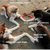 doin a summon frens  awoo spirit of t  milkbones  heck Inot sign  up for tihs  All hail teh super doggo ~Obaasan Doge