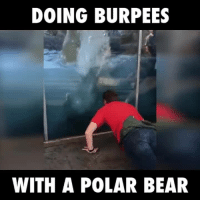 DOING BURPEES  WITH A POLAR BEAR