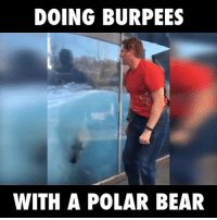 Funny, Bear, and Bears: DOING BURPEES  WITH A POLAR BEAR Doing Burpees With A Polar Bear :D
