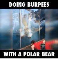DOING BURPEES  WITH A POLAR BEAR this polar bear wants some exercise