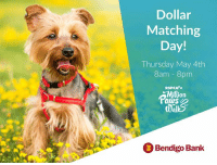 Dollar Matching Day! Thursday May 4th 8am 8pm RSPCA Illion 3