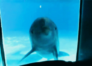 Dolphins see themselves in a mirror  everyone should stop and reblog dolphins in a mirror  Dolphin: NO WONDER THE ICE CAPS ARE MELTING. IM FUCKIN HOT.  sassy dolphins. :     Dolphins see themselves in a mirror  everyone should stop and reblog dolphins in a mirror  Dolphin: NO WONDER THE ICE CAPS ARE MELTING. IM FUCKIN HOT.  sassy dolphins.