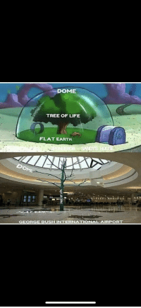 Bush: DOME  TREE OF LIFE  FLAT EARTH  GEORGE BUSH INTERNATIONAL AIRPORT Bush