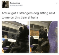 Memes, Train, and 🤖: Domenica  @_domenica00  Actual got a strangers dog sitting next  to me on this train ahhaha Currently my new bestie ❤️