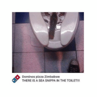 Honestlyy........why do we separate our clothes.......idgaf if my whites aren't pristine.....who tf finna be color checking me . . if someone actually calls me out on it we gonna catch hands cuz ill be damned if a bitch try to color correct my lazy ass .. ........Gn -x: Dominos pizza zimbabwe  THERE IS THE TOILET!!! Honestlyy........why do we separate our clothes.......idgaf if my whites aren't pristine.....who tf finna be color checking me . . if someone actually calls me out on it we gonna catch hands cuz ill be damned if a bitch try to color correct my lazy ass .. ........Gn -x