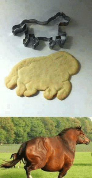 Don't insult my cookie, it think it looks like a real horse.: Don't insult my cookie, it think it looks like a real horse.