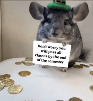Don't stress, Pimp chinchilla gave you goodluck: Don't stress, Pimp chinchilla gave you goodluck