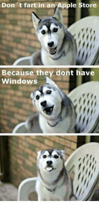 9gag, Apple, and Dank: Don it fart in an,Apple Store  Because they dont have  Windows Listen up hooman. http://9gag.com/gag/aAd6gzd?ref+fbpic