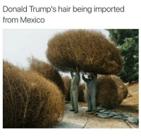 Memes, 🤖, and Donald Trumps Hair: Donald Trump's hair being imported  from Mexico