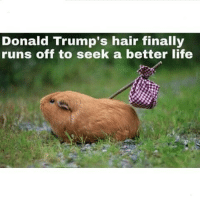 Donald Trump, Finals, and Funny: Donald Trump's hair finally  runs off to seek a better life Played him 😂😂😂
