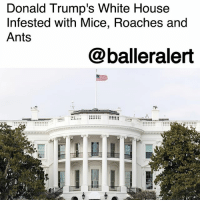 "Donald Trump's White House Infested with Mice, Roaches and Ants – blogged by @MsJennyb ⠀⠀⠀⠀⠀⠀⠀ ⠀⠀⠀⠀⠀⠀⠀ NBC 4 Washington has obtained several hundred White House work orders, which include several requests to deal with an infestation of mice, cockroaches, and ants. According to reports, mice have been spotted in the situation room and the Navy mess food service area of the historic landmark and home of the Celebrity-in-chief. ⠀⠀⠀⠀⠀⠀⠀ ⠀⠀⠀⠀⠀⠀⠀ Cockroaches have been seen in at least four other parts of the White House, while ants have made a home in the chief of staff's office. However, extermination demands weren't the only maintenance requirements included in the work order. One request asked for a redecoration of national security adviser H.R. McMaster, while another requested a new Oval Office toilet seat. ⠀⠀⠀⠀⠀⠀⠀ ⠀⠀⠀⠀⠀⠀⠀ The mice issue dates back to at least two years, however, other requests from 2017, include new furniture for White House Press Secretary Sean Spicer and drapery installation in Melania Trump's second-floor East Wing office. Although the work orders vary, the U.S. General Service Administration (GSA) says the entire process is a lot of work, considering the age of the building. ⠀⠀⠀⠀⠀⠀⠀ ⠀⠀⠀⠀⠀⠀⠀ ""It's an enormous job. GSA is assigned to manage that job,"" former GSA Inspector said. ""GSA hires contractors and subcontractors for the [maintenance] work. Then the agency must watch over the contractors."" ⠀⠀⠀⠀⠀⠀⠀ ⠀⠀⠀⠀⠀⠀⠀ ""They are old buildings,"" he said. ""Any of us who have old houses know old houses need a lot of work."": Donald Trump's White House  Infested with Mice, Roaches and  Ants  @balleralert Donald Trump's White House Infested with Mice, Roaches and Ants – blogged by @MsJennyb ⠀⠀⠀⠀⠀⠀⠀ ⠀⠀⠀⠀⠀⠀⠀ NBC 4 Washington has obtained several hundred White House work orders, which include several requests to deal with an infestation of mice, cockroaches, and ants. According to reports, mice have been spotted in the situation room and the Navy mess food service area of the historic landmark and home of the Celebrity-in-chief. ⠀⠀⠀⠀⠀⠀⠀ ⠀⠀⠀⠀⠀⠀⠀ Cockroaches have been seen in at least four other parts of the White House, while ants have made a home in the chief of staff's office. However, extermination demands weren't the only maintenance requirements included in the work order. One request asked for a redecoration of national security adviser H.R. McMaster, while another requested a new Oval Office toilet seat. ⠀⠀⠀⠀⠀⠀⠀ ⠀⠀⠀⠀⠀⠀⠀ The mice issue dates back to at least two years, however, other requests from 2017, include new furniture for White House Press Secretary Sean Spicer and drapery installation in Melania Trump's second-floor East Wing office. Although the work orders vary, the U.S. General Service Administration (GSA) says the entire process is a lot of work, considering the age of the building. ⠀⠀⠀⠀⠀⠀⠀ ⠀⠀⠀⠀⠀⠀⠀ ""It's an enormous job. GSA is assigned to manage that job,"" former GSA Inspector said. ""GSA hires contractors and subcontractors for the [maintenance] work. Then the agency must watch over the contractors."" ⠀⠀⠀⠀⠀⠀⠀ ⠀⠀⠀⠀⠀⠀⠀ ""They are old buildings,"" he said. ""Any of us who have old houses know old houses need a lot of work."""