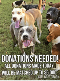 """Donations Needed! The """"Zoline Foundation"""" is matching All Donations Made to """"A Place To Bark"""" today, till midnight tonight and postmarked today. To Donate online by Paypal: paypal.me/aplacetobark To Donate via Good World: #donate on this page in the comments below, to receive a donation link. To Donate By mail: """"A Place To Bark"""" PO Box 649 Portland, TN 37148 Or Donate directly to our veterinarians office: Gallatin Animal Hospital 338 Sumner Hall Dr Gallatin TN 37066-3129 (615) 206-0145 Or  Village Veterinary Hospital 3578 N Mount Juliet Rd Mount Juliet, TN  37122  (615) 754-2040  Please make a tax deductible donation, of any amount, to help us, meet our goal.   Your donation will be doubled, Win/Win! We want to start the New Year on a positive note with money in our medical fund, so we can continue on Saving The Lives of homeless pets💕 Thank You For Following Our Journey And Believing In Life, That Every Homeless Pet Deserves A Loving Home!!! Because they can't save themselves... Blessings, Love & Light To Everyone! May """"2017"""" be the Best Year Ever❤️  #everylifematters #aplacetobark #togetherwesavelives: DONATIONS NEEDED!  ALL DONATIONS MADE TODAY  WILL BE MATCHED UP TO S5.000 Donations Needed! The """"Zoline Foundation"""" is matching All Donations Made to """"A Place To Bark"""" today, till midnight tonight and postmarked today. To Donate online by Paypal: paypal.me/aplacetobark To Donate via Good World: #donate on this page in the comments below, to receive a donation link. To Donate By mail: """"A Place To Bark"""" PO Box 649 Portland, TN 37148 Or Donate directly to our veterinarians office: Gallatin Animal Hospital 338 Sumner Hall Dr Gallatin TN 37066-3129 (615) 206-0145 Or  Village Veterinary Hospital 3578 N Mount Juliet Rd Mount Juliet, TN  37122  (615) 754-2040  Please make a tax deductible donation, of any amount, to help us, meet our goal.   Your donation will be doubled, Win/Win! We want to start the New Year on a positive note with money in our medical fund, so we can con"""