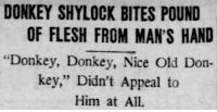 "Ass, Donkey, and Rude: DONKEY SHYLOCK BITES POUND  OF FLESH FROM MAN'S HAND  ""Donkey, Donkey, Nice Old Don-  key,"" Didn't Appeal to  Him at All <p><a href=""http://celticpyro.tumblr.com/post/158989547949/yesterdaysprint-st-louis-post-dispatch"" class=""tumblr_blog"">celticpyro</a>:</p>  <blockquote><p><a href=""http://yesterdays-print.com/post/158951499064/st-louis-post-dispatch-missouri-november-19"" class=""tumblr_blog"">yesterdaysprint</a>:</p><blockquote><p>  St. Louis Post-Dispatch, Missouri, November 19, 1908  <br/></p></blockquote> <p>What a rude ass.<br/></p></blockquote>"