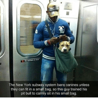 Memes, Subway, and Bulls: Donotkaan on door  The New York subway system bans canines unless  they can fit in a small bag, so this guy trained his  pit bull to calmly sit in his small bag 😂😂👏👏👏 - - - 420 memesdaily Relatable dank MarchMadness HoodJokes Hilarious Comedy HoodHumor ZeroChill Jokes Funny KanyeWest KimKardashian litasf KylieJenner JustinBieber Squad Crazy Omg Accurate Kardashians Epic bieber Weed TagSomeone hiphop trump ovo drake