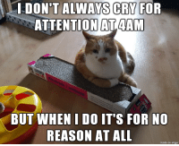 Cats, Imgur, and World: DON'T ALWASCRI FOR  ATTENTION AT4AM  BUT WHEN I DO IT'S FOR NO  REASON AT ALL  made on imgur The Most Interesting Cat in the World