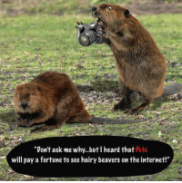 Dank Internet And  F0 9f A4 96 Dont Ask Me Why Buti Heard That Pete Will Pay A Fortune To See Hairy Beavers On The Internet