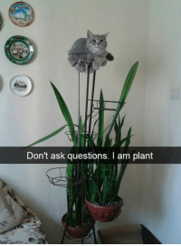 9gag, Dank, and 🤖: Don't ask questions. I am plant If it fits, I sit. https://9gag.com/gag/a6oByD9?ref=fbpic