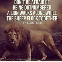-Rebecca: DONT BE AFRAIDOF  BEING OUTNUMBERED  A LION WALKS ALONE WHILE  THE SHEEP FLOCK TOGETHER  IG BECOMETHE LION -Rebecca