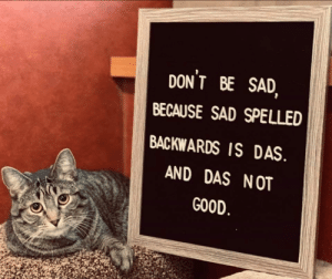 Cute, Good, and Sad: DONT BE SAD  BECAUSE SAD SPELLED  BACKWARDS IS DAS  AND DAS NOT  GOOD Let this cute cat tell you