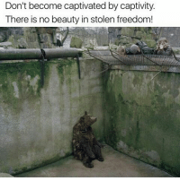America, cnn.com, and Love: Don't become captivated by captivity.  There is no beauty in stolen freedom! We all have right to live peacefully on this planet but yeah no it's not possible until we shut down the elites ... We all are in same game bro.. FuckTheGovenment WeAreAnonymous Anonymous WW3 MissArmy_anons Army_anons CorruptedSystem CNN HumanRights Allah Islam MuslimBan WarCrimes Love BigPharma Saudi America Turkey Israel UnitedKingdom NATO UnitedNations Russia Korea Syria Iraq Libya FreePalestine BoycottIsrael.