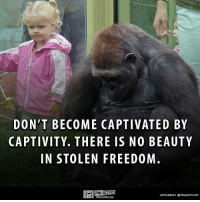 Memes, Mail, and Content: DON'T BECOME CAPTIVATED BY  CAPTIVITY. THERE IS NO BEAUTY  IN STOLEN FREEDOM  TRUE ACTIVIST  INSTAGRAM OTRUEACTIVIST Subscribe to our mailing list and receive our awesome content for FREE - http://goo.gl/caXxWZ