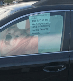 Music, Break, and Water: dont break the  window  The A/C is on  He has water  and is listening  to his favorite  music. https://t.co/lnEh54lrbO