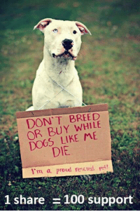Memes, 🤖, and Pet: DON'T BREED  OR BUY DOGS LIKE DIE  1 m a proud rescued pet!  1 share  100 support 100% agreed... #instadog#rescue #rspca #relax #rescuedogs #puppylove #PARKLIFE #puppytraining #play #parklife #puppylife #puppies#PUPPYINSTA #puppyinsta #pets #pupoftheday #doggrooming #dogtraining #doggyinstagram #dogsofinsta #DOGS #dogsofinsta #love #life #london #lovelypuppie #Lickeyhills #labrador #liondog