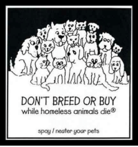 neuter: DON'T BREED OR BUY  while homeless animals die  spay 1 neuter your pets