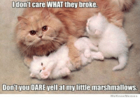 For more cute pics LIKE us at The Purrfect Feline Page: don't care WHAT they broke.  Dontvou DARE Vell at mylittle marshmallows.  We now Memes For more cute pics LIKE us at The Purrfect Feline Page