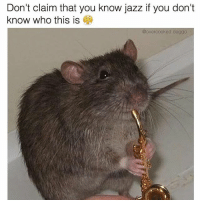 4chan, Memes, and Music: Don't claim that you know jazz if you don't  know who this is  @overcooked doggo ____________________________________________ Follow my personal account @noahdovb (Photography, music, and shit) ___________________________________________ eataburger filthyfrank edgymemes triggered offensivecontent papafranku dankmemes edgy4days kidzbop ayylmao offensive cringe 4chan edgybullshit fantasticfuckers injectedmemes memecucks edgy filthyfrank