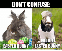 LOL or not?: DON'T CONFUSE:  MIDDLE  EASTER BUNNY EASTER BUNNY LOL or not?