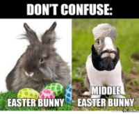 Please stop confusing them: DON'T CONFUSE:  MIDDLE  EASTER BUNNY EASTER BUNNY Please stop confusing them