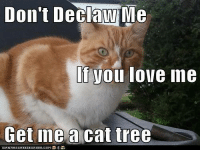 Love, Memes, and Tree: Don't Declaw Me  NW  If you love ine  Get meacat tree