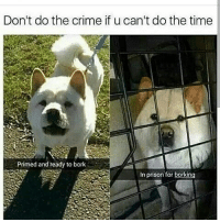 Bad, Cats, and Crazy: Don't do the crime if u can't do the time  Primed and ready to bork  in prison for borking Lmao😂follow @codmemenation (me) for more! Like for good luck👊ignore for bad luck😩 Tag a friend😎👍 ➖➖➖➖➖➖➖➖➖➖➖➖➖➖➖➖➖✔Credit:unknown DM for credit Follow my backup accounts @cod_meme_nation & @animal.angel ➖➖➖➖➖➖➖➖➖➖➖➖➖➖➖ ⏬ Hashtags (ignore) ⏬ cod game gaming gamer meme drake dog dogs cat cats trump 2017 battlefield battlefield1 gta gtav gta5 gtavonline comedy savage humor gamers Relatable Hilarious KimKardashian KylieJenner Squad Crazy Omg Epic