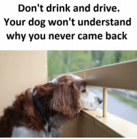 Fuck me 😭😭😭: Don't drink and drive.  Your dog won't understand  why you never came back Fuck me 😭😭😭
