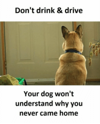 Memes, 🤖, and Drink Driving: Don't drink & drive  Your dog won't  understand why you  never came home