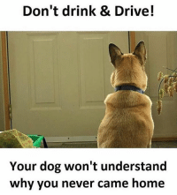 Memes, Sarcasm, and 🤖: Don't drink & Drive!  Your dog won't understand  why you never came home Twitter: BLB247 Snapchat : BELIKEBRO.COM belikebro sarcasm meme Follow @be.like.bro