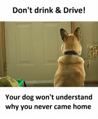 Dog, Dogging, and Drink Driving: Don't drink & Drive!  Your dog won't understand  why you never came home