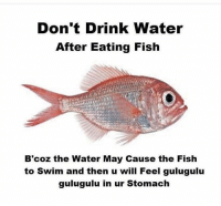 What did I just read?: Don't Drink Water  After Eating Fish  B'coz the Water May Cause the Fish  to swim and then u will Feel gulugulu  gulugulu in ur Stomach What did I just read?