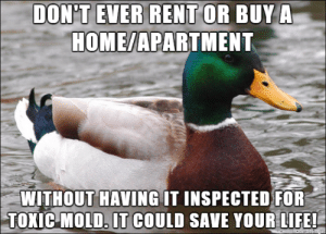 Truth: DON'T EVER RENT OR BUY A  HOME/APARTMENT  WITHOUT HAVING IT INSPECTED FOR  TOXIC MOLD. IT COULD SAVE YOUR LIFE! Truth