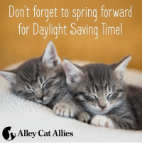 Dont forget to spring forward  for Daylight Saving Time  Alleycat Allies These kittens lost an hour of nap time! Adjust feeding times slowly as you SpringForward to keep cats on schedule.