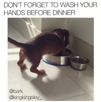 Memes, 🤖, and Via: DON'T FORGET TO WASH YOUR  HANDS BEFORE DINNER  @bark  @kingkingsley Cleanliness before hungriness. . Original vid via @kingkingsley__