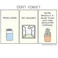 Memes, Omg, and House: DONT FORGET  YOU'RE  BASICALLY A  DRINK WATER. GET SUNLIGHT. HOUSE PLANT  WITH MORE  COMPLICATED  EMOTIONS  poorlydrawnlines.com (artist: @poorlydrawnlines) i just remembered my dead houseplants and i feel so guilty now omg i should really water them