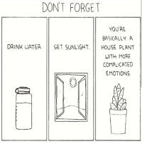 purplebuddhaquotes:  Purple Buddha Project Insta: DONT FORGET  YOU'RE  BASICALLY A  DRINK WATER GET SUNLIGHT. HOUSE PLANT  WITH MORE  COMPLICATED  EMOTIONS purplebuddhaquotes:  Purple Buddha Project Insta