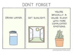Coffee, House, and Water: DONT FORGET  YOU'RE  BASICALLY A  DRINK WATER  GET SUNLIGHT. HOUSE PLANT  WITH MORE  COMPLICATED  EMOTIONS  poorlydrawnlines.com Which makes coffee basically Miracle-Gro®
