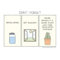 House, Vitamin D, and Water: DONT FORGET  YOU'RE  BASICALLY A  DRINK WATER GET SUNLIGHT.HOUSE PLANT  WITH MORE  COMPLICATED  EMOTIONS  poorlydrawnlines.com Gots to get that vitamin D