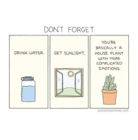 Water, Com, and Source: DONT FORGET  YOU'RE  BASICALLY A  DRINK WATER GET SUNLIGHTHOUSE PLANT  WITH MORE  COMPLICATED  EMOTIONS  poorlydrawnlines.com source: Poorly Drawn Lineslines