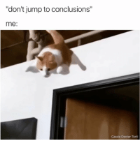 "Dexter, Relatable, and Cassie: ""don't jump to conclusions""  me:  Cassie Dexter Torti LIKE THIS IF IT'S YOU"